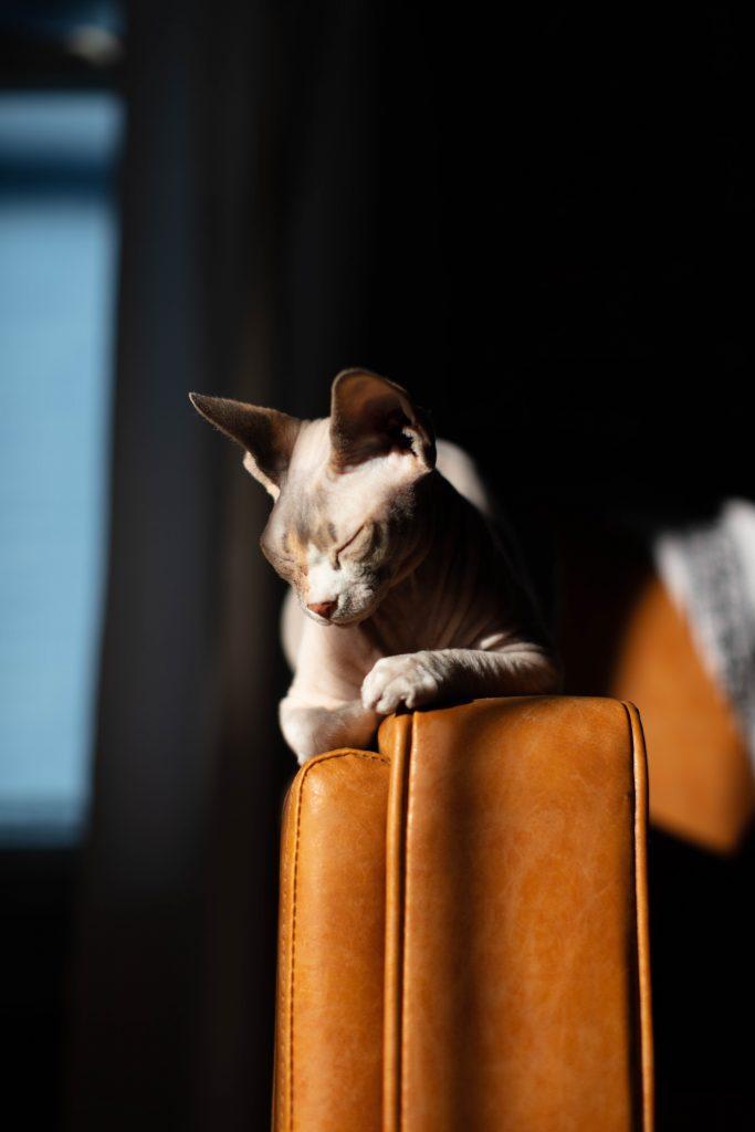 Comment enlever des griffes de chat sur un fauteuil en cuir ?